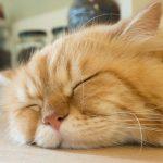 なんだか眠れない…それ「不眠症」かも。そんなツラい不眠症に効果的な方法